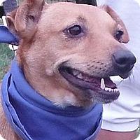 Adopt A Pet :: Margie - Chapel Hill, NC