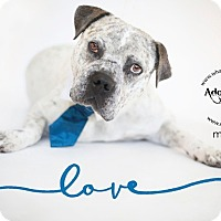 Adopt A Pet :: Mack - Los Angeles, CA