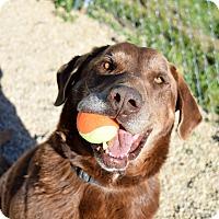 Adopt A Pet :: Max - Meridian, ID