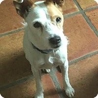 Adopt A Pet :: COOKIE - Terra Ceia, FL