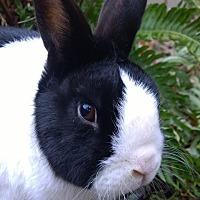 Adopt A Pet :: Ryker - Seattle c/o Kingston 98346/ Washington State, WA