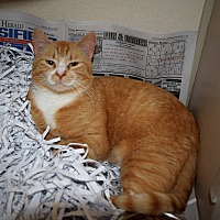 Adopt A Pet :: Anderson - Pottsville, PA
