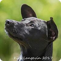 Adopt A Pet :: Raven - Bradenton, FL