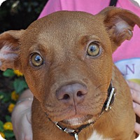 Adopt A Pet :: Clint Eastwood - Atlanta, GA