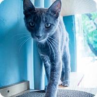 Adopt A Pet :: Miss Mercury - Philadelphia, PA