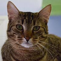 Adopt A Pet :: Jenny - Island Park, NY