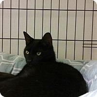 Adopt A Pet :: Binx - Goshen, NY