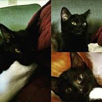 Adopt A Pet :: Matilda - McHenry, IL
