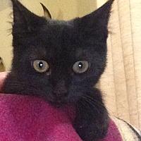 Adopt A Pet :: Max - Eureka, CA