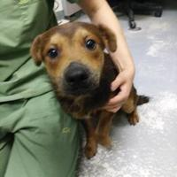 Adopt A Pet :: Alvin - West Olive, MI