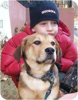 Labrador Retriever/Australian Shepherd Mix Puppy for adoption in Cumming, Georgia - Donnor