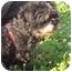 Photo 2 - Shih Tzu Dog for adoption in Freeport, New York - Jason