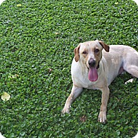 Adopt A Pet :: Fawn - Lewisville, IN
