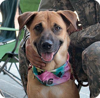 Shepherd (Unknown Type) Mix Dog for adoption in Richmond, Virginia - Jesse