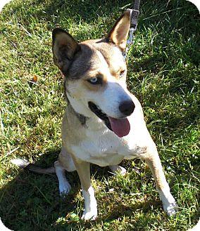 Husky Mix Dog for adoption in Bartonsville, Pennsylvania - Heather