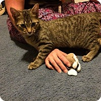 Adopt A Pet :: Tigger - Pineville, NC