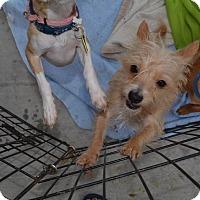 Adopt A Pet :: Barbie - Scottsdale, AZ