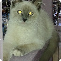Adopt A Pet :: Nicki - Whittier, CA