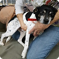 Adopt A Pet :: Willie - Henderson, KY