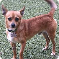 Adopt A Pet :: Tiberon - Allentown, PA