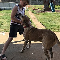 Boxer/Pointer Mix Dog for adoption in Meridianville, Alabama - Fiona