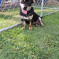 Adopt A Pet :: Rocky - Snyder, TX