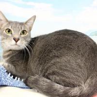 Adopt A Pet :: Dierks - Harrisonburg, VA