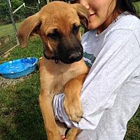 Adopt A Pet :: Seth - Greeneville, TN