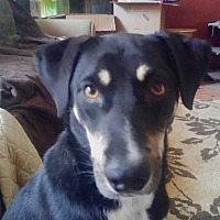Adopt A Pet :: Pepper - Austin, TX