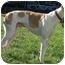 Photo 2 - Greyhound Dog for adoption in Chagrin Falls, Ohio - Phoenix (Witty Carl)