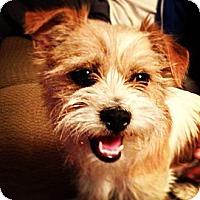 Adopt A Pet :: LACI - Mission Viejo, CA