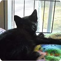 Adopt A Pet :: Amazing Grace - Riverside, RI