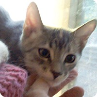 Adopt A Pet :: Bairn - North Highlands, CA