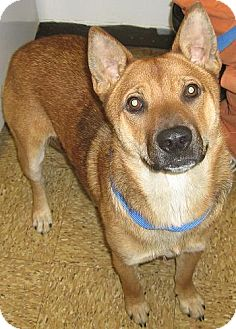 Shepherd (Unknown Type)/Chow Chow Mix Dog for adoption in Kankakee, Illinois - Kiki