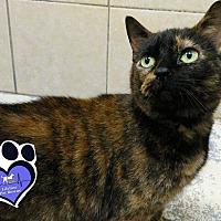 Adopt A Pet :: Thelma - Huntsville, AL