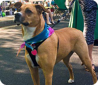 Boxer Mix Dog for adoption in Alpharetta, Georgia - Roxie