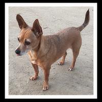 Adopt A Pet :: AUNT BEA - Winchester, CA