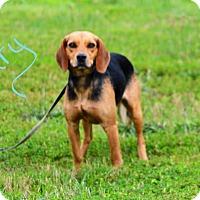Adopt A Pet :: Gary - Lebanon, MO
