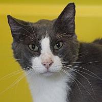 Adopt A Pet :: Lars - Colfax, IA