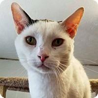 Adopt A Pet :: Dusty - New York, NY