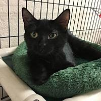Adopt A Pet :: Dip - Pendleton, NY