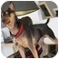Photo 1 - Miniature Pinscher Dog for adoption in Crofton, Maryland - SHYLO