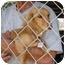 Photo 1 - Dachshund Dog for adoption in Vista, California - Mia