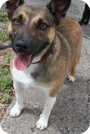 Terrier (Unknown Type, Medium) Mix Dog for adoption in West Des Moines, Iowa - Inca
