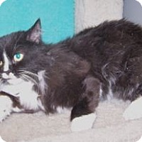 Adopt A Pet :: Ebby - Colorado Springs, CO