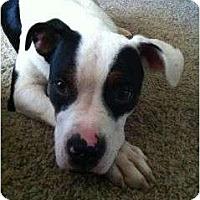 Adopt A Pet :: Annie - Fresno, CA