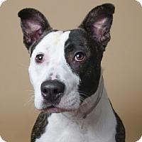 Adopt A Pet :: Hank - Port Washington, NY
