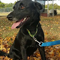 Adopt A Pet :: SamuelOKs31 - Davis, OK