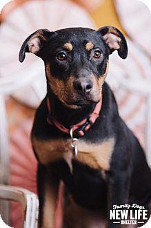 Doberman Pinscher Mix Dog for adoption in Portland, Oregon - Jasmine