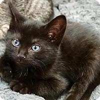 Adopt A Pet :: Briquette - River Edge, NJ